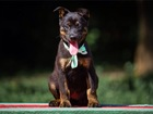 Свежее foto Отдам даром - приму в дар Уникальные щенятки как тигрятки в поисках семьи! 70138871 в Москве