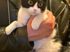 Новое изображение  Чудесная кошечка Санса ищет дом, 70246074 в Москве