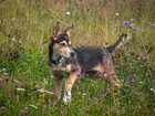 Увидеть фотографию  Джек собака - компаньон в поисках дома 70282395 в Москве