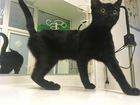 Увидеть foto  Очаровательный черный котенок-девочка ищет дом, 70400049 в Москве