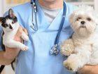 Уникальное foto  Ветеринарные услуги для кошек и собак 71309768 в Москве