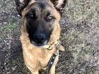 Смотреть изображение  Замечательная собака Гретта ищет своих любящих хозяев! 74596641 в Москве