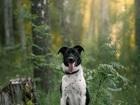 Скачать бесплатно foto Разное Небольшая собачка Кайли в добрые руки 81175477 в Москве