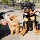 Дрессировка собак в г, Елабуга