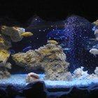 Оформление и обслуживание аквариумов