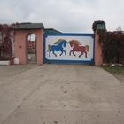 Продается конюшня