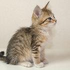 Котёнок Ешка в хорошие руки, 2 месяца