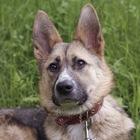 Собака Юта ищет дом и любящую семью