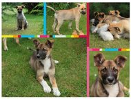 Три трех-мес, щенка-девочки ищут хозяев Срочно ищем хозяев для этих малышей! Все