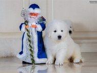 щенки маремма абруццкой овчарки продаются щенки маремма абруццкой овчарки. от ро