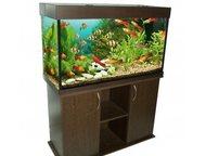 Купите аквариум, Насладитесь океаном у себя дома Просто нажмите на ссылку под об