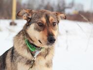 Пёс-оптимист Кевин в поисках лучшего хозяина Кевин предлагает Вам свои лапу и се