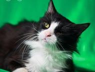 Ищет дом и любящих родителей кот Пират Котик очень добрый к людям, детям и други