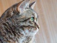 Масяня, ласковая кошка-компаньон Если вы ищете ласковую кошку, которая будет сог