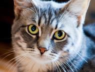 Дымчатый котик Филя с изумрудными глазами ищет дом Знакомьтесь, это Филипп.   Ла