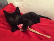 Малыш Шпротик ищет любящую семью Пушистику около 2 месяцев, идеально черный окра