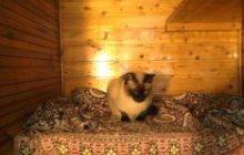Гостиница для кошек Кошкин Дом