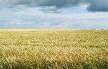 Земли сельскохозяйственного назначения на берегу Москва-реки