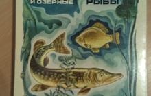 Советские наборы спичек Советская радиоаппаратура и Речные и озёрные рыбы