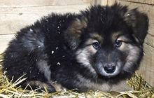 Три обаятельных щенка ищут дом