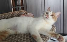 Кошечка -подросток, Мякушка ищет дом