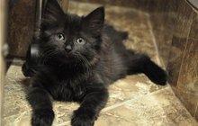 Черные котята в добрые руки