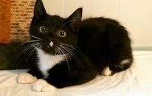Ищет дом котенок Бакстер в дар