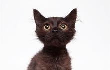 Котенок Каспер в добрые руки