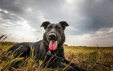 Красивая собака Йолли ищет дом