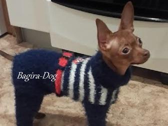 Скачать фото Одежда для собак Одежда для собак и кошек Bagira-Dog 18275192 в Москве