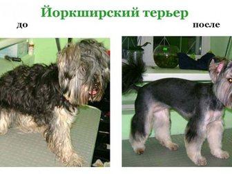 Просмотреть фото Услуги для животных стрижка собак и кошек, выезд на дом 32411276 в Москве
