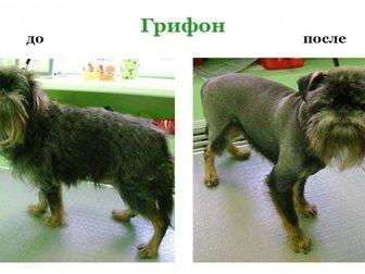 Смотреть foto Услуги для животных стрижка собак и кошек, выезд на дом 32411276 в Москве