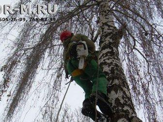 Скачать бесплатно foto Разное Удаление деревьев частями 32680077 в Москве