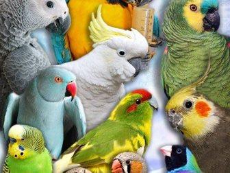 Просмотреть foto Птички Приютим вашу птичку и окружим заботой и любовью 32873020 в Москве