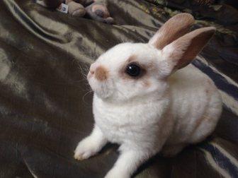 Просмотреть фотографию  Распродажа декоративных кроликов по низким ценам 32975733 в Москве