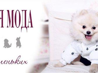 Уникальное фотографию Продажа домов Одежда для собак 33620673 в Москве