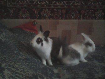 Увидеть изображение Грызуны Декоративные кролики 34008463 в Москве