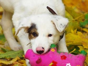 Скачать бесплатно фото  Красивый щенок Бим в добрые руки, 44161109 в Москве
