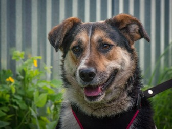Смотреть изображение  Добрый пес Рони в добрые руки, 44555989 в Москве