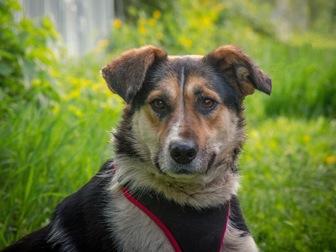 Уникальное фото  Добрый пес Рони в добрые руки, 44555989 в Москве