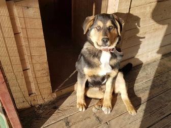 Смотреть фотографию  Очаровательный щенок Боря в добрые руки, 45218015 в Москве
