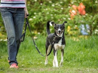 Свежее изображение  Собака Нора, в дар, в добрые руки, 49959965 в Москве