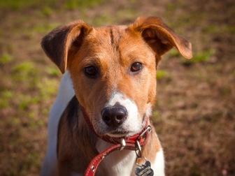 Увидеть foto  Самый милый щенок Майло в добрые руки! 50050702 в Москве