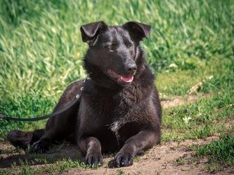 Новое фотографию  Красивая чёрная собака Берта в добрые руки, 50054732 в Москве