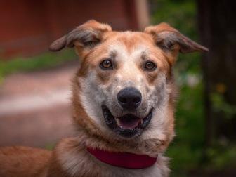 Новое фото  Изящная, красивая собака в добрые руки! 50087116 в Москве