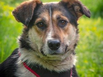 Просмотреть foto  Добрый пес Рони в добрые руки, В дар, 50183234 в Москве