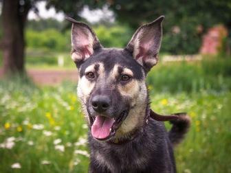 Свежее фотографию  Классный пес Ронни в добрые руки, 50196411 в Москве