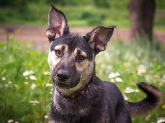 Увидеть фотографию  Классный пес Ронни в добрые руки, 50196411 в Москве