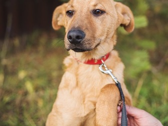 Скачать бесплатно фотографию  Чудесный щенок Тина в добрые руки, 50198969 в Москве