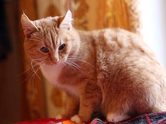 Новое foto  Рыжий красавец сэр Томас ищет дом, 50221829 в Москве